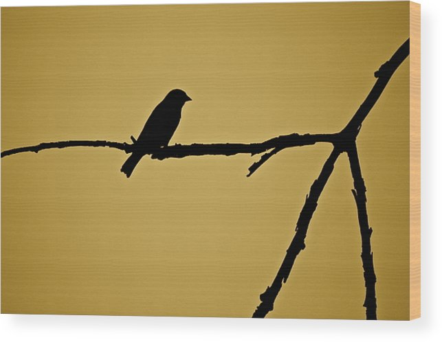 Bird Wood Print featuring the photograph Goldfinch by Diana Hatcher
