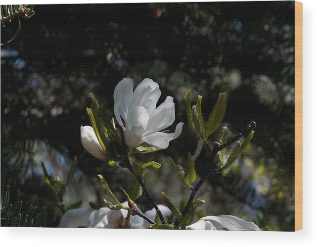 Bloom Wood Print featuring the photograph Good Morning Sunshine by Craig Hosterman