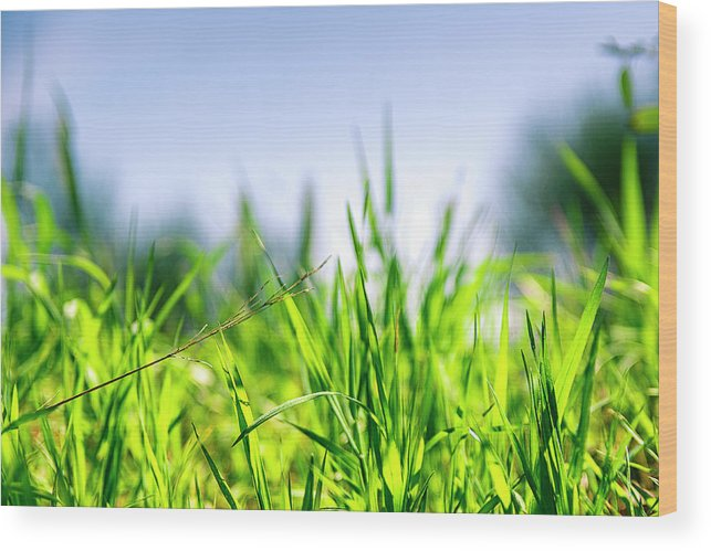 Grass Wood Print featuring the photograph Grass by Nikos Stavrakas