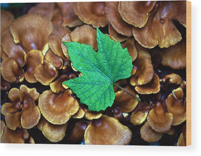 Nature Wood Print featuring the photograph Green Leaf On Fungus by Carl Purcell