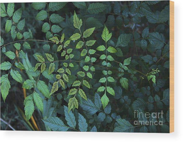Nature Wood Print featuring the photograph Green Leaves by Viktor Savchenko