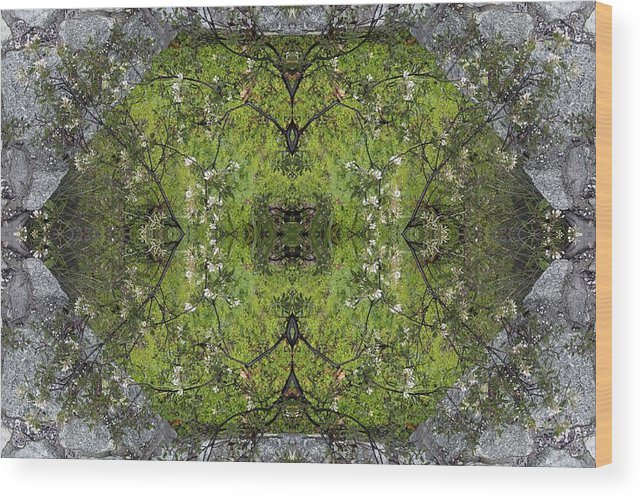 Green Wood Print featuring the photograph Green Mandala by Viktor Savchenko