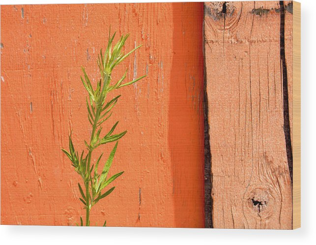 Color Wood Print featuring the photograph Green On Orange 2 by Art Ferrier