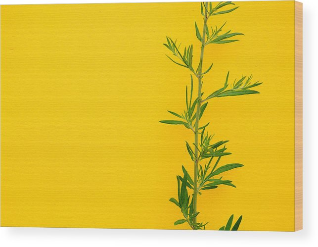 Color Wood Print featuring the photograph Green On Yellow 5 by Art Ferrier