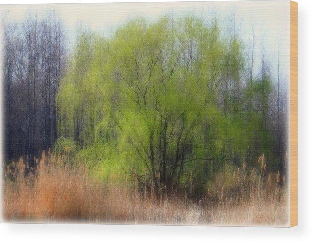 Scenic Art Wood Print featuring the photograph Green Tree by Linda Sannuti