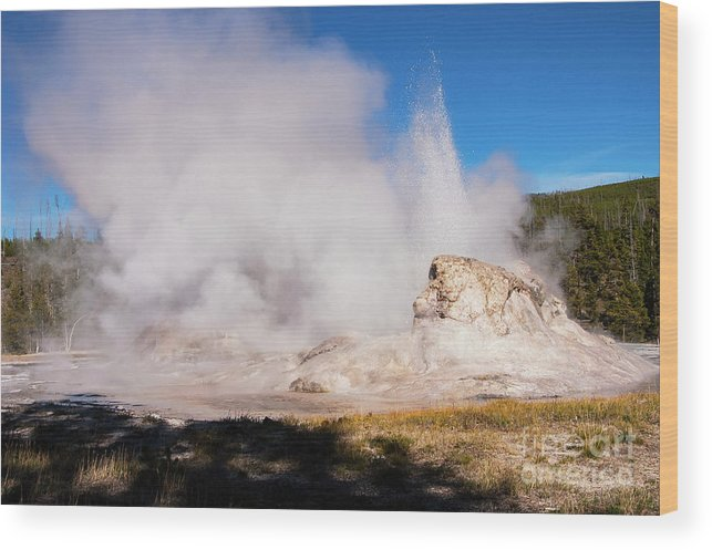Yellowstone National Park Wood Print featuring the photograph Grotto Geyser Eruption And Spray by Bob Phillips