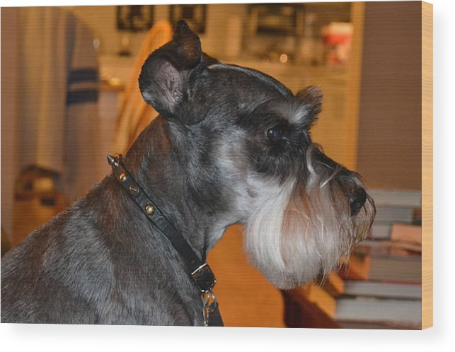 Dog Wood Print featuring the photograph Handsome by Carol Bradley