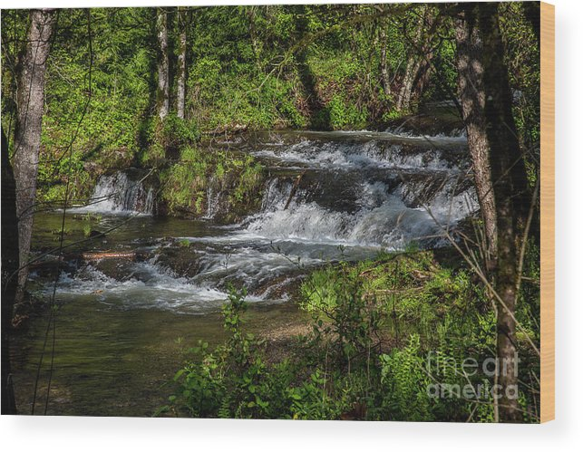Water Wood Print featuring the photograph Happy Splashing by Kathy McClure