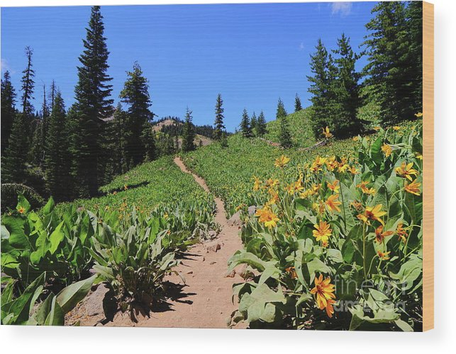 Trail Wood Print featuring the photograph Happy Trails by Leia Hewitt