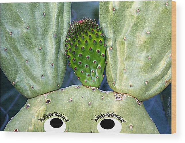 Cactus Wood Print featuring the photograph Hare Stylist by Greg Taylor