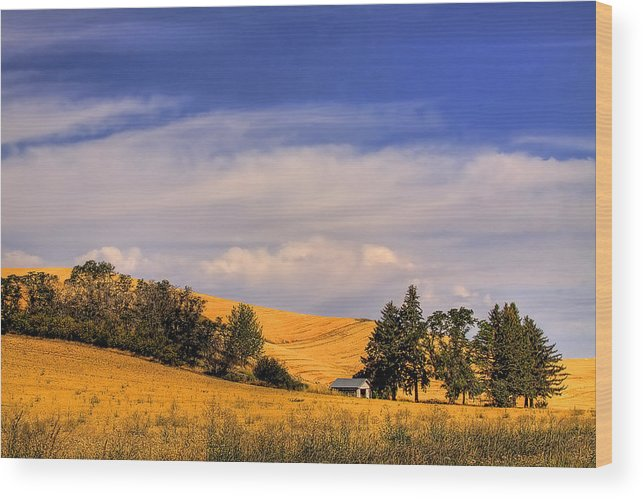 Landscape Wood Print featuring the photograph Harvested by David Patterson