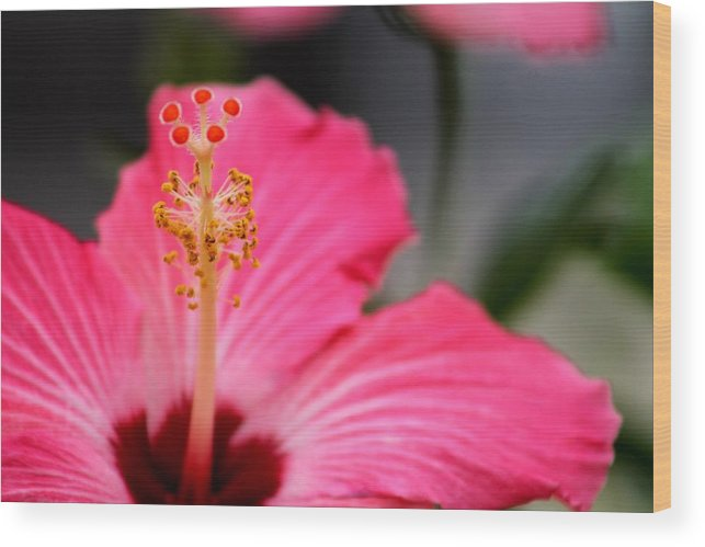 Tropical Wood Print featuring the photograph Hibiscus by Amber Sims