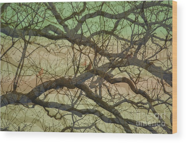 Hedge Wood Print featuring the photograph Hedge 3 by Affini Woodley