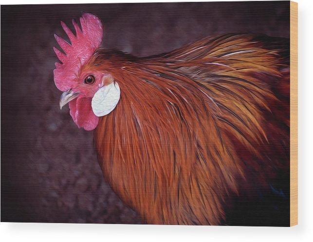 Hen Digital Paint Art Wood Print featuring the photograph Hen Chicken, Digital Paint by Lakshmikanth Kummari