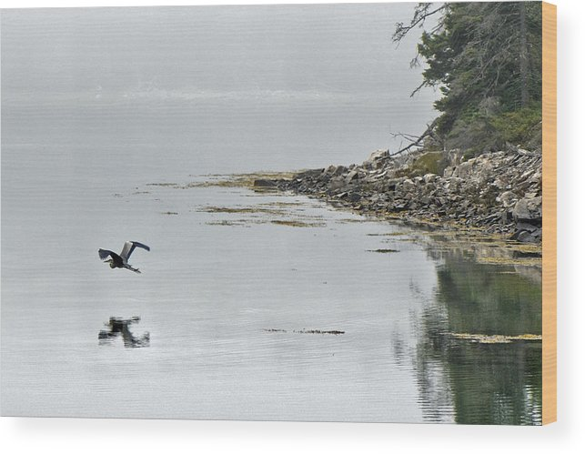 Heron Wood Print featuring the photograph Heron Off Ship's Harbor Cove by Jack Goldberg