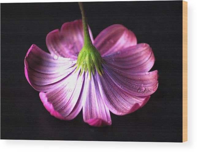 Purple Wood Print featuring the photograph Hidden Beauty by Jennifer Englehardt