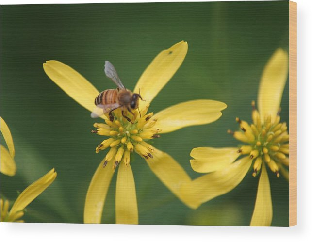 Nature Wood Print featuring the photograph Honey Bee Mine by Gregory Jeffries