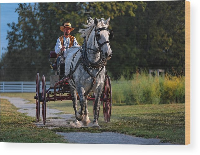 Horse Wood Print featuring the photograph Horse And Buggy by Lone Dakota Photography