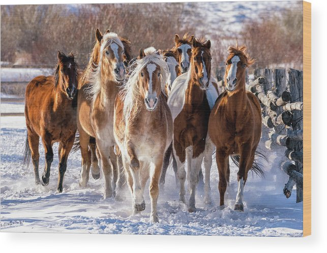 Horses Wood Print featuring the photograph Horse Herd In Snow by David Soldano