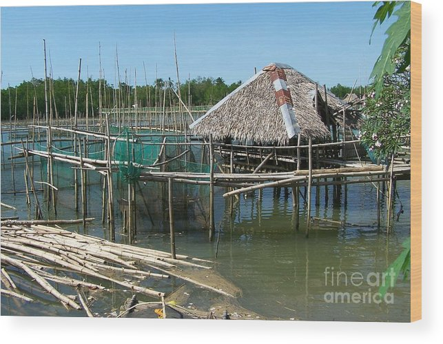 Oyster Wood Print featuring the photograph House On Stilts by Dindin Coscolluela