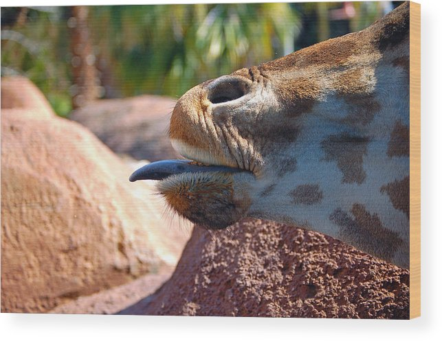 Giraffe Wood Print featuring the photograph How About A Kiss by Donna Proctor