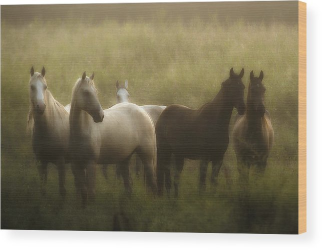 Horse Wood Print featuring the photograph I Dreamed Of Horses by Ron McGinnis