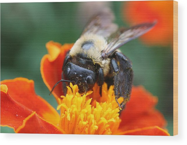 Bug Wood Print featuring the photograph I Like Pollen by Jason Hochman