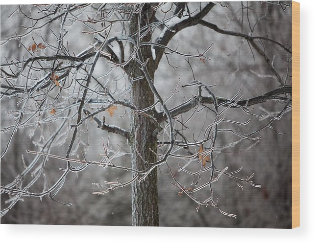Nature Wood Print featuring the photograph Ice Tree by Jane Melgaard