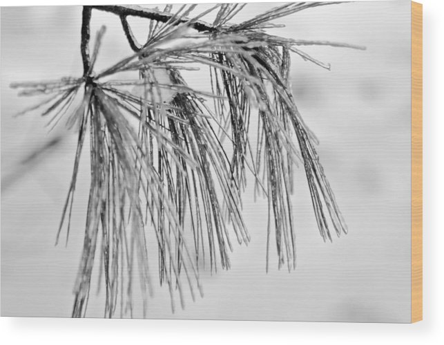 Nature Wood Print featuring the photograph Icy Pines On A Snowy Day by Robin Lynne Schwind