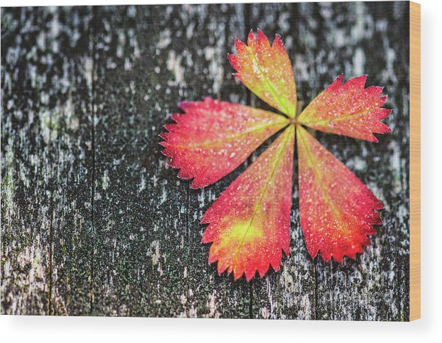 Kremsdorf Wood Print featuring the photograph Impressions Of Autumn by Evelina Kremsdorf
