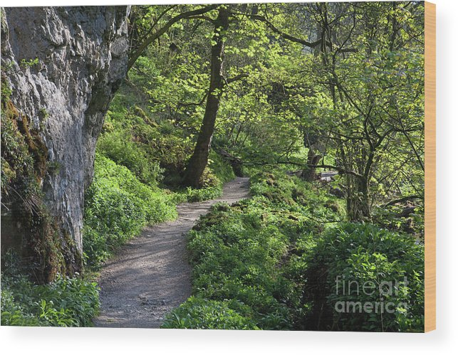 Janet's Foss Wood Print featuring the photograph Janet's Foss Path by Gavin Dronfield