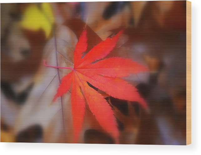 Autumn Image Wood Print featuring the photograph Japanese Maple Leaf by Marla McPherson