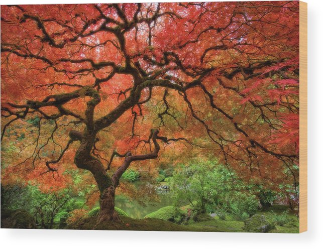 Horizontal Wood Print featuring the photograph Japenese Garden, Portland by Jesse Estes