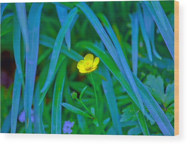 Flower Wood Print featuring the photograph Jellow Flower by John Toxey