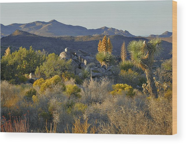 Sunset Wood Print featuring the photograph Joshua Tree National Park In California by Christine Till