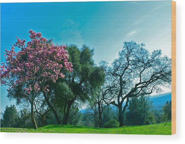 Pink Trees Wood Print featuring the photograph Kelly's Ridge by Lisa Billingsley
