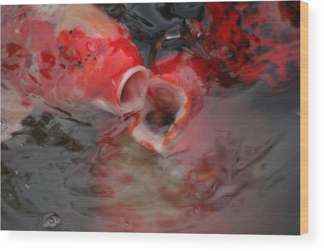 Fish Wood Print featuring the photograph Kiss Me You Fool by Lynn Chatman