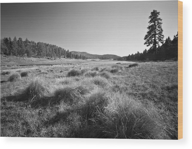 Afternoon Wood Print featuring the photograph Laguna Meadows And Big Laguna by Alexander Kunz