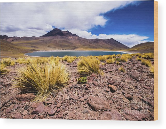 Laguna Wood Print featuring the photograph Laguna Miniques by Olivier Steiner