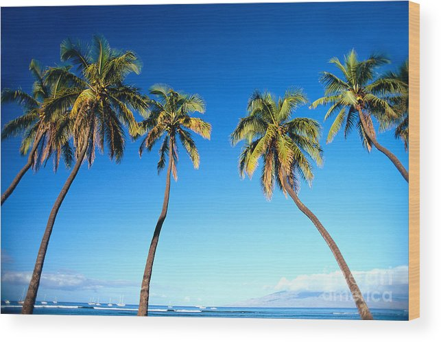 Bark Wood Print featuring the photograph Lahaina Palms by Carl Shaneff - Printscapes
