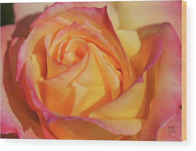 Center Wood Print featuring the photograph Large Peace Rose Center 006 by Shirley Heyn