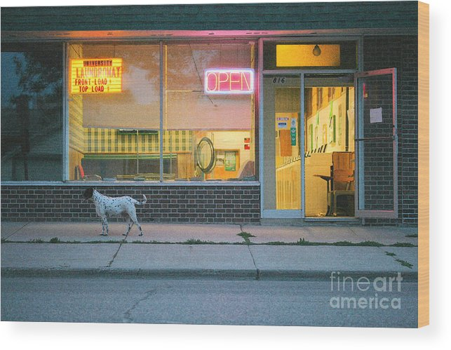 Dog Wood Print featuring the photograph Laundromat Open by Steve Augustin