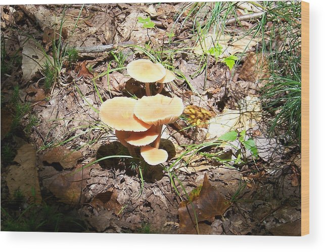 Mushrooms Wood Print featuring the photograph Let The Sunshine In - Photograph by Jackie Mueller-Jones