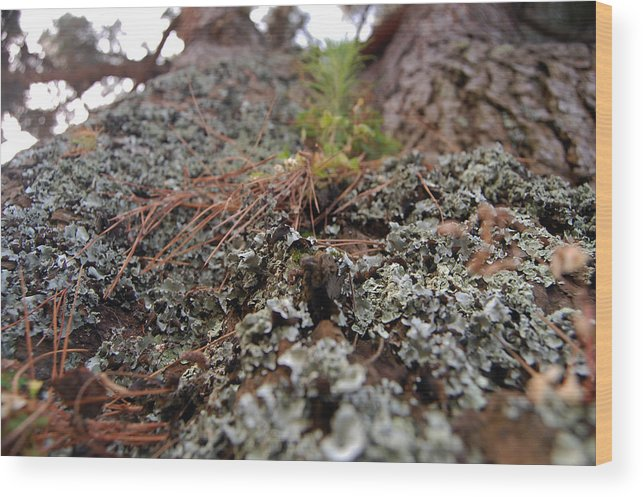 Lichen Wood Print featuring the photograph Lichen Tower by Jean Booth