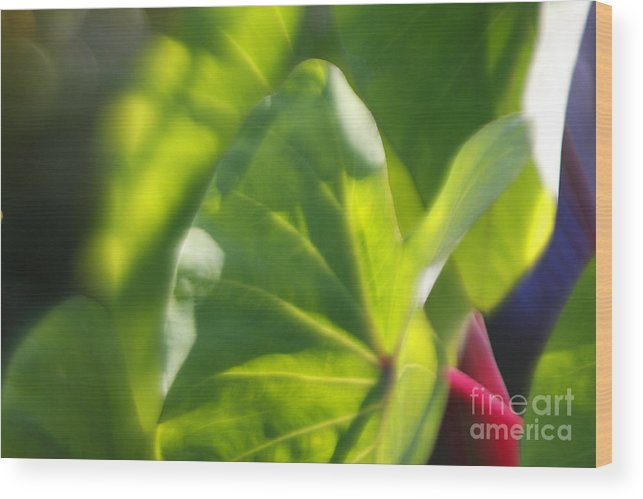 Green Wood Print featuring the photograph Light II by Katherine Morgan