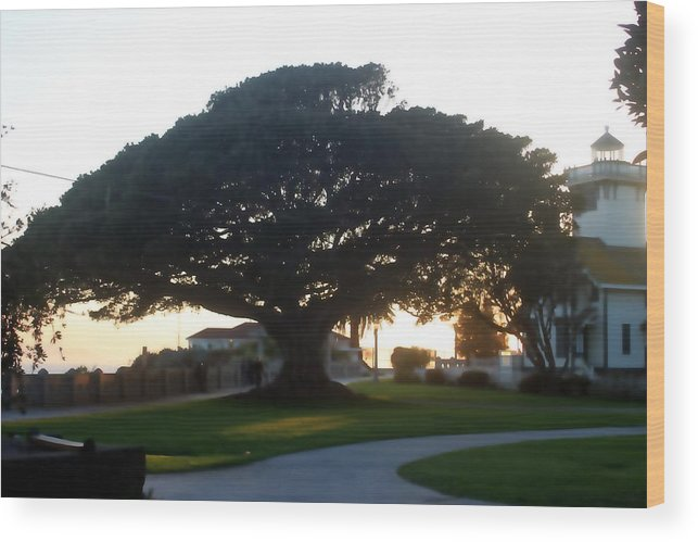 Tree Wood Print featuring the photograph Lighthouse Tree 0556 by Edward Ruth
