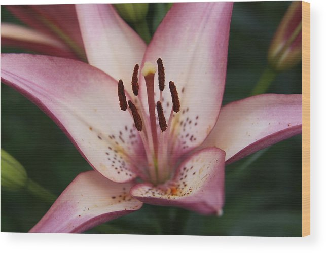 Landscape Wood Print featuring the photograph Lily by Gayle Johnson