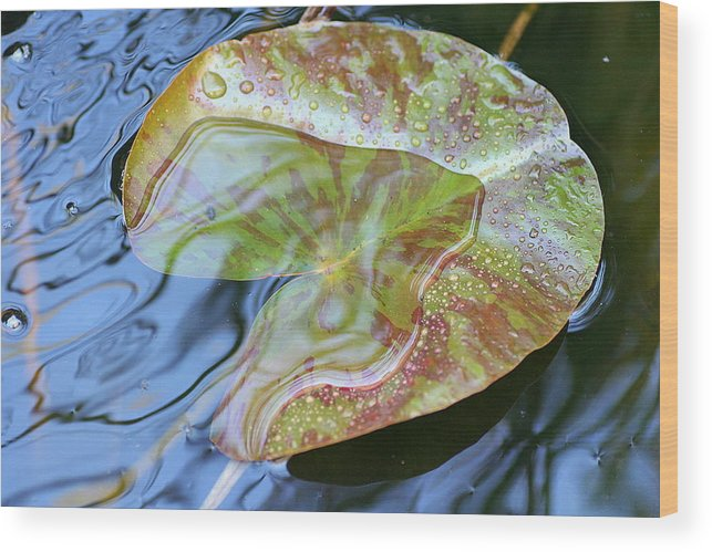 Lily Pad Wood Print featuring the photograph Lily Pad On The Pond by Kerry Reed