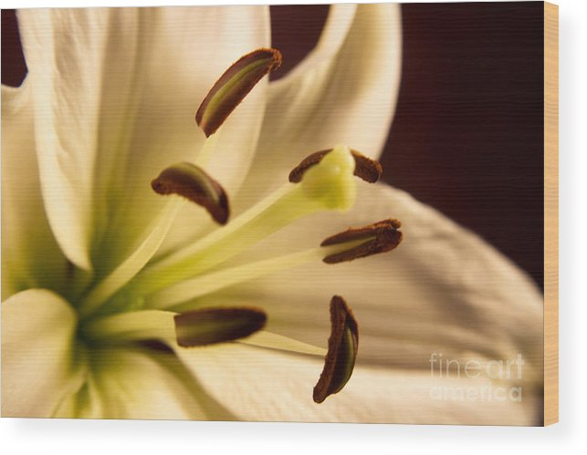 Lily Wood Print featuring the photograph Lily Series 2 by Robin Lynne Schwind