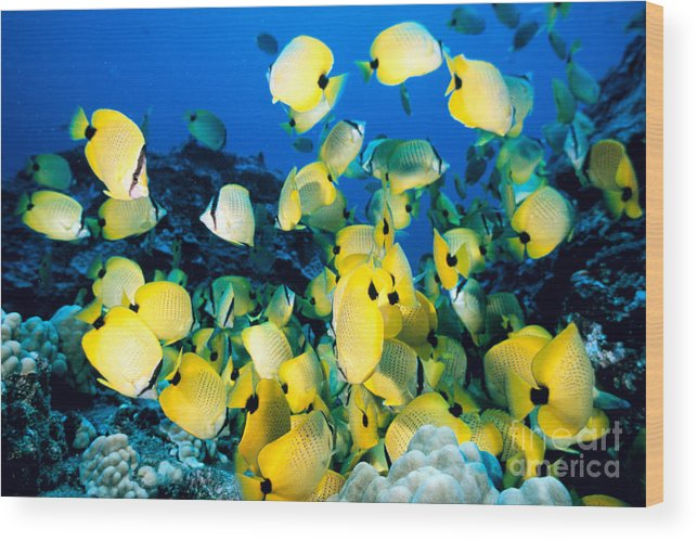 Animal Art Wood Print featuring the photograph Lined Butterflyfish by Bob Abraham - Printscapes